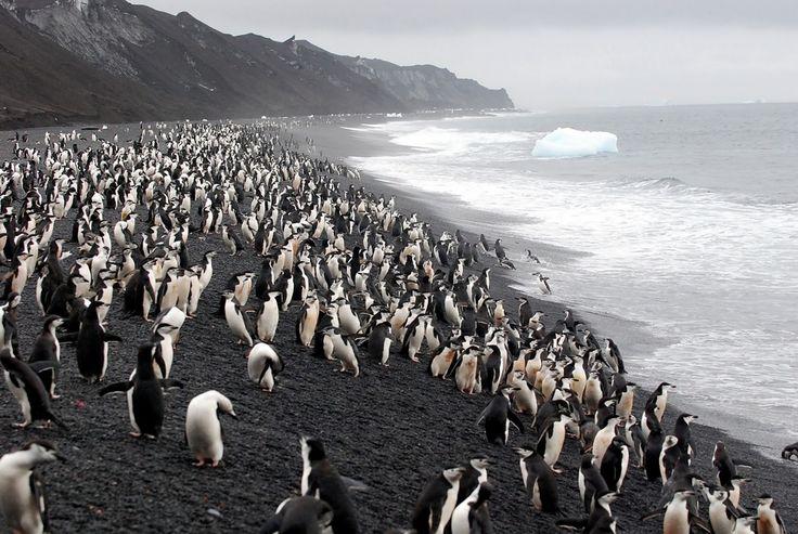 Ile de la Déception, Antarctique