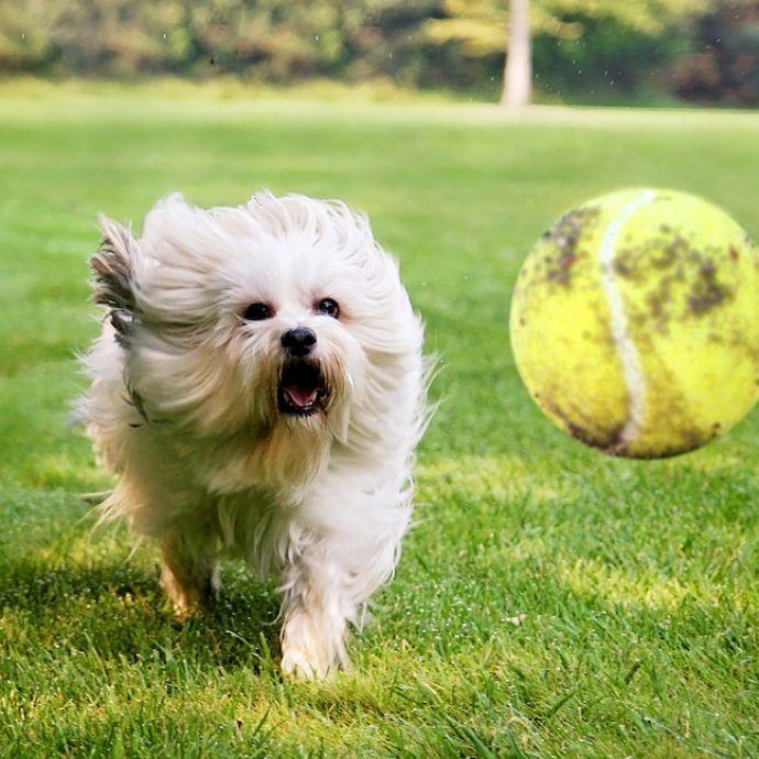 6 Hund Wandern Spiele Zum Gewurz Up Ihres Hundes Wandern Burn Mehr Energie Dog Care Diy Maltese Dogs Clothes Dog Walking