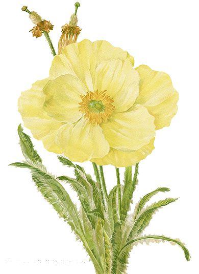 Flowerspng: flower_png
