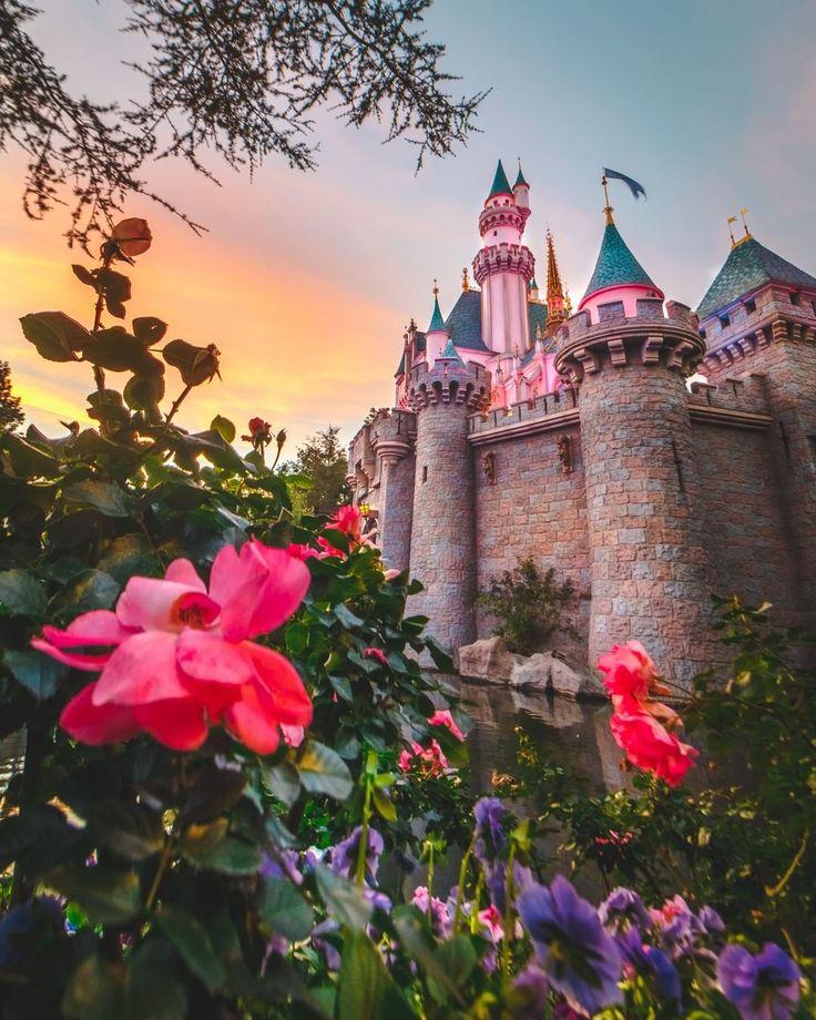 всего розовый замок фото предками были представители