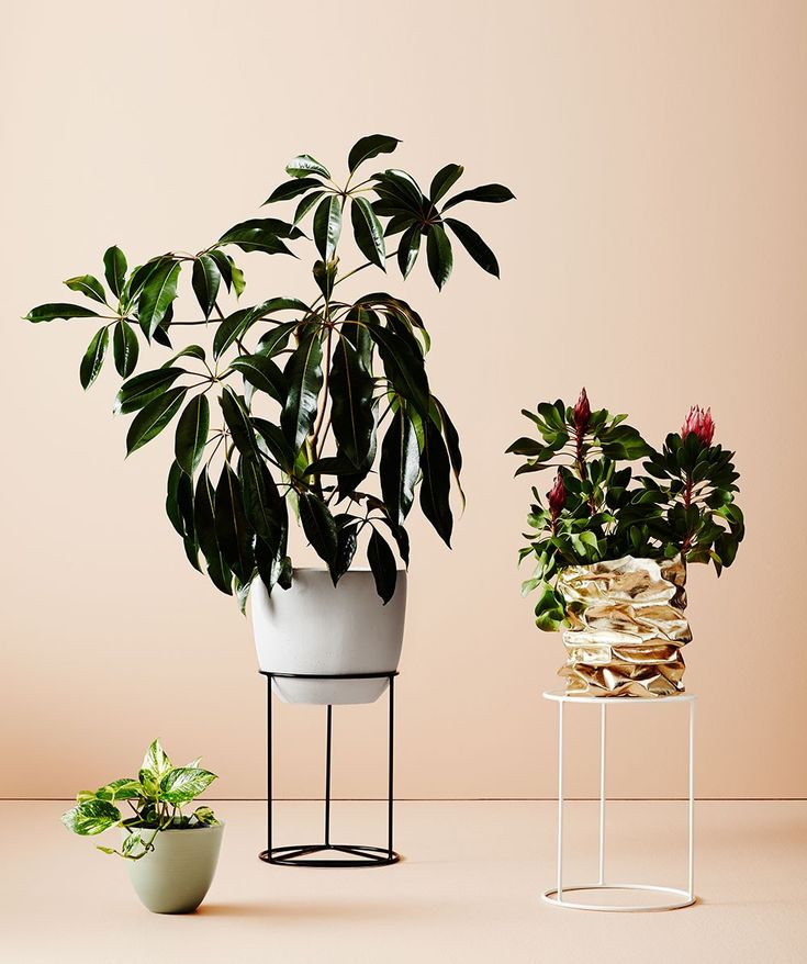 The Prism plant stand from Ivy Muse is a versatile short stand that is suited to a wide range of pot shapes and sizes. | huntingforgeorge.com