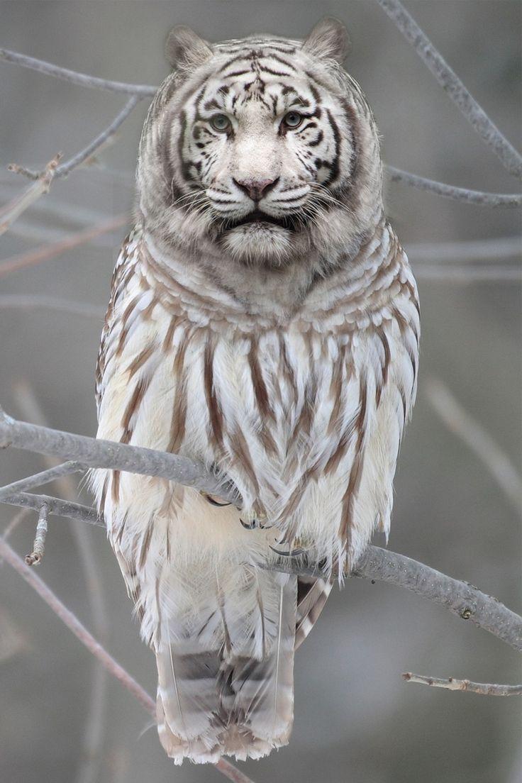 Leeuwenuil