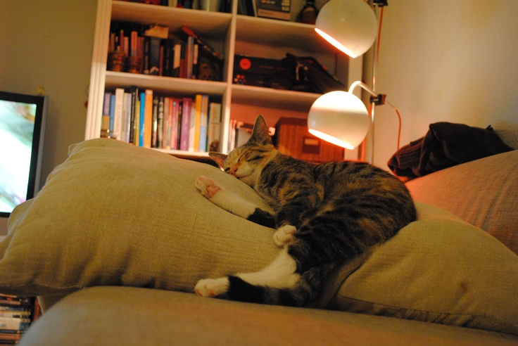 """Our cat """"Wilma"""" in, what you might call, deep sleep"""