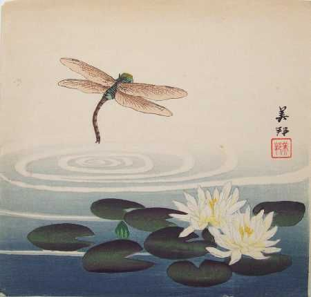 Takahashi dragonfly