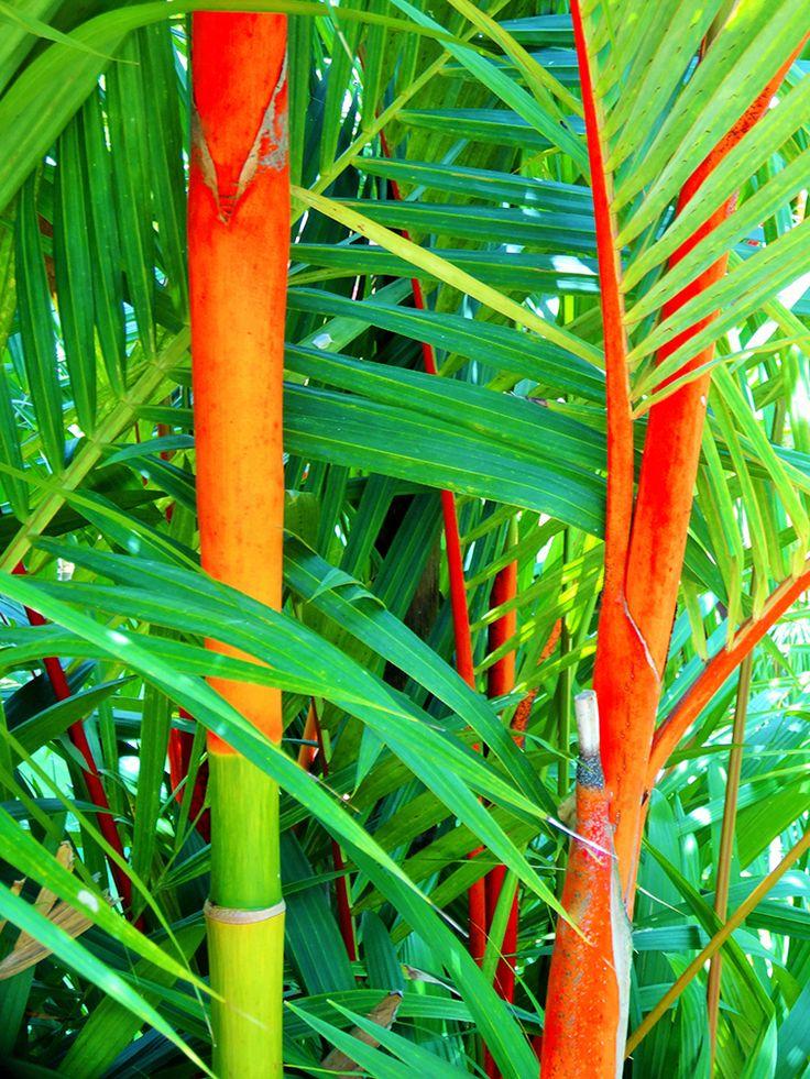 Bambouseraie | Des Goûts et des COULEURS