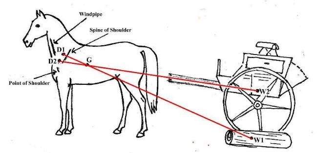 List Of Synonyms And Antonyms Of The Word Horse Harness Diagram