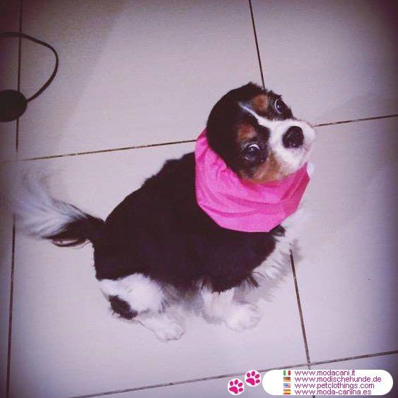 Wasserdicht Ohrenschutz für Hunde in Rosa #Hunde #CavalierKing - Wasserdicht Ohrenschutz für Hunde mit langen und haarig Ohren in Rosa; erhältlich in 2 Größen: Small für Cavalier King, Medium für Cocker Spaniel