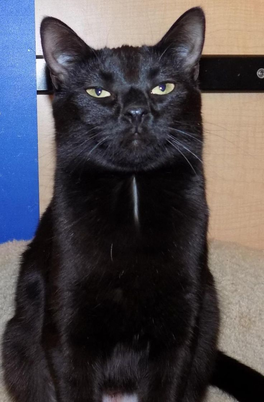 12 best Adoptable Kitties images on Pinterest