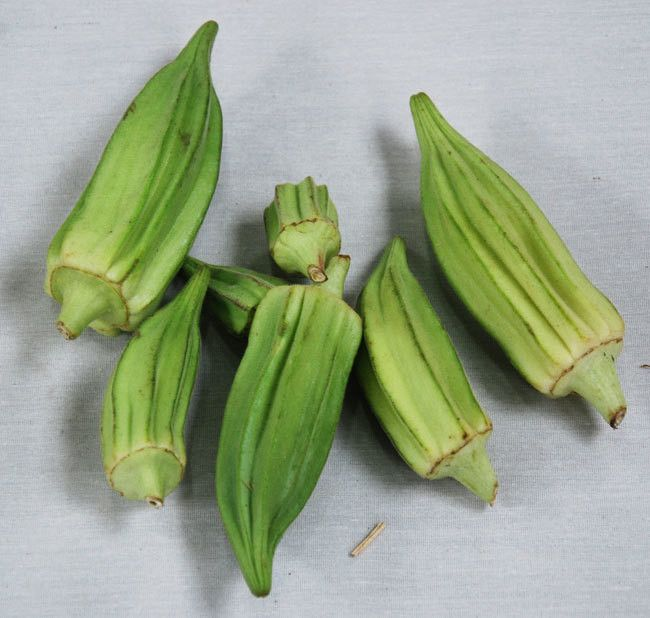 Star of David Okra Seeds + FREE Bonus 6 Variety Seed Pack - a $30 Value!