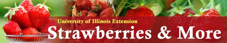 Growing Strawberries  Types    June bearing or spring bearing, everbearing and day neutral are the three types of strawberries grown in Illinois. Fruits of day neutral plants and everbearers are usually smaller than June-bearers fruit.    June bearing strawberries produce a crop during a two-to-three week period in the spring. June-bearers produce flowers, fruits and runners. They are classified into early, mid-season and late varieties.....