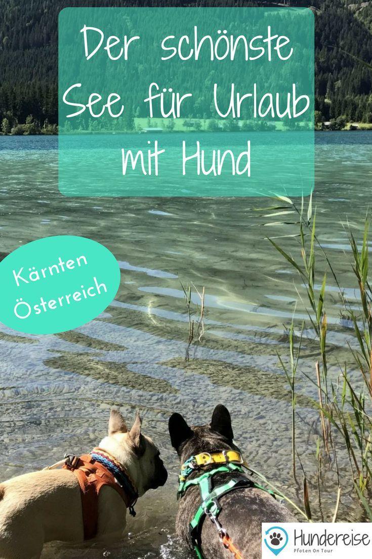Urlaub Mit Hund Am Weissensee Karnten Hundereise Urlaub Mit Hund Karnten Urlaub Ferien Mit Hund