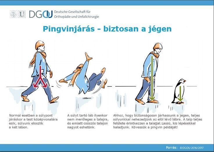 Nem fog elesni, ha úgy jár, mint a pingvin - HáziPatika
