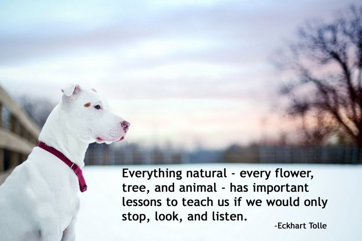 Image result for Lessons animals can teach us about life quotes