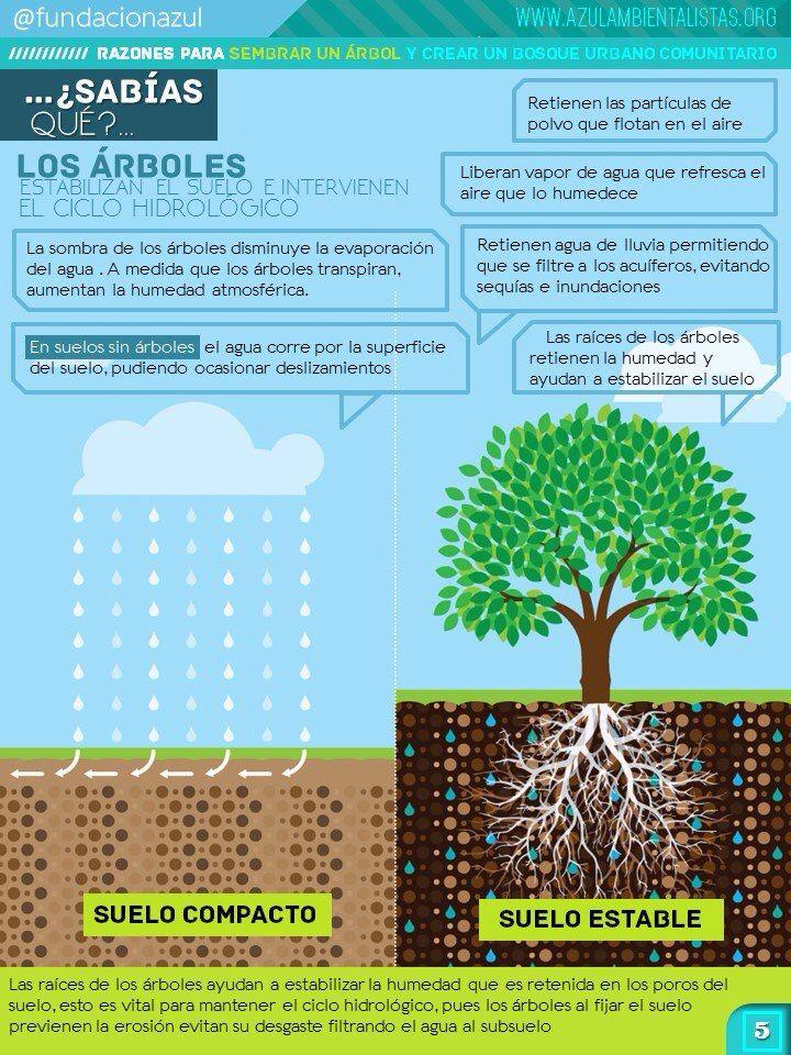 #SabiasQue los arboles contribuyen a retener el agua de lluvia del suelo, evitando las sequías e inundaciones.