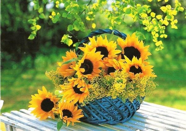 pingl par pascale giraud sur tournesol flowers sunflower garden et beautiful flowers. Black Bedroom Furniture Sets. Home Design Ideas