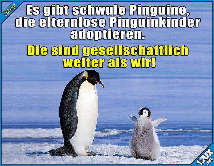 Du entscheidest mich macht alles gluecklich wenn wir unsereLeben teilen❤Von Pinguinen kann man noch was lernen :)