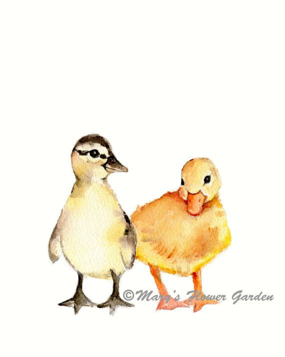 Just Ducky    ***5 X 7 vertical print of two baby ducks from my original watercolor painting    ***printed on Velvet fine art paper which has