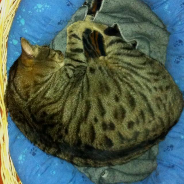 "My cat ""lillo"" sleeps deeply"