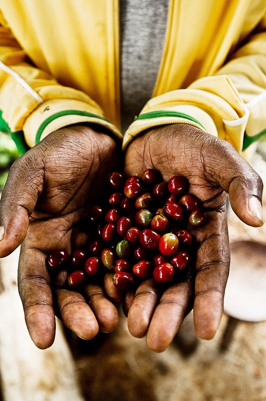 coffee beans, Ethiopia