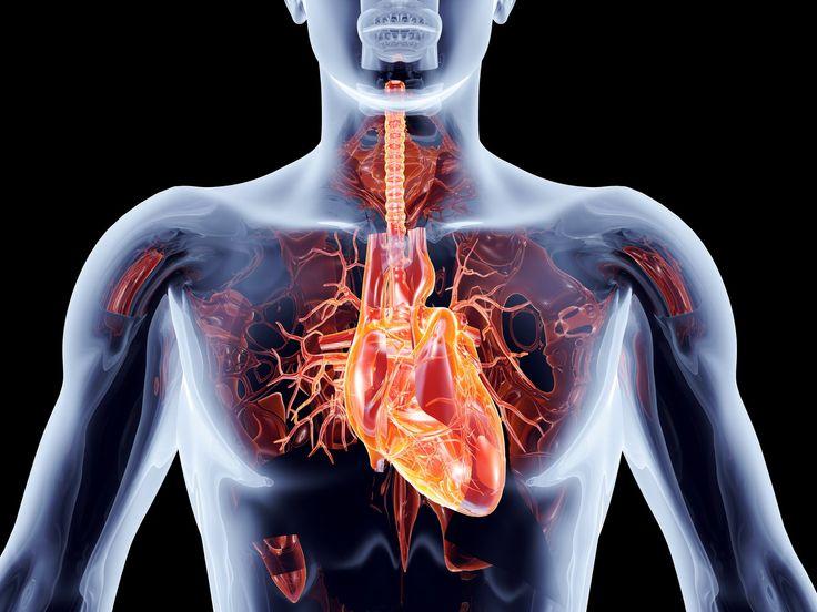 Infarkt myokardu - příznaky a první pomoc