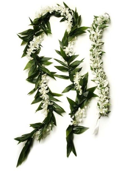Groom's Maile and Stephanotis lei, possible haku. I had stephanotis in my hair. They smell beautiful, but turn brown easily! If you are sensitive to scent, orchids might be a good choice.