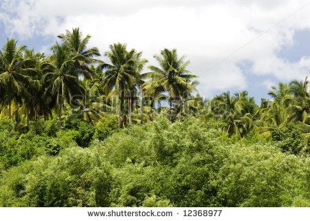 Jungles as opposed to rainforest