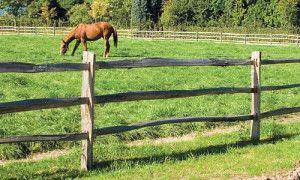cloture bois pour chevaux