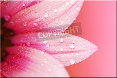 Leinwandbild Rosa Blütenblätter