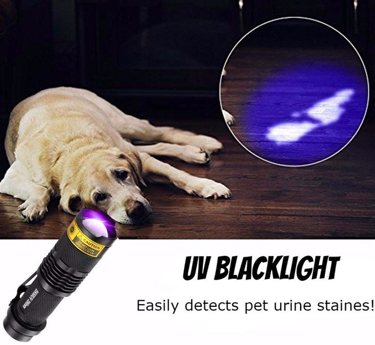 UV Zoomable Urine Detector Light   Highlights      Make invisible visible.     Clearly show dried pets urine and stains on Carpet, Rugs or Furniture Material.     Easily spot scorpions     Powerful, portable and handhold UV flashlight include emits 395nm wavelength.     Power supply: 1X AA or 1x14500 batteries ( not included)     Size: 92 x 26 x  22mm  Note      The ultraviolet led black light works best in dark environment, the darker it is, the better it works