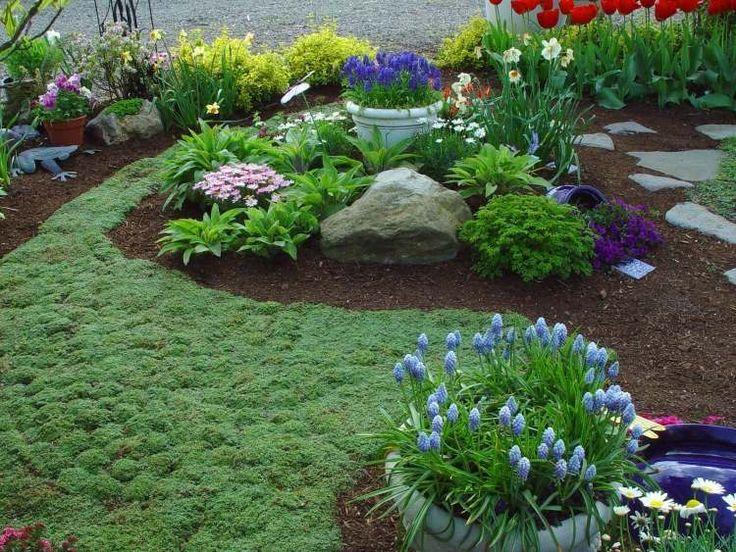 plantes couvre sol croissance rapide dans le jardin moderne amenagement rocaille plantes