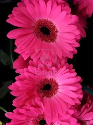 Love love love pink gerbs!! These were our wedding flowers :)