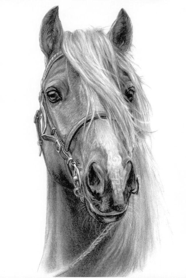 Днем, картинка лошади карандашом