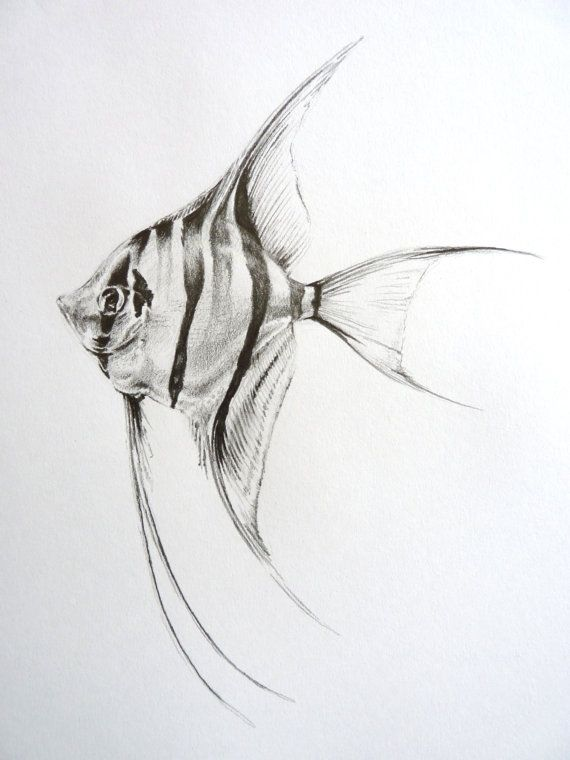 Angel Fish Drawing in Pencil by Lucy Beevor by CaughtByTheLight