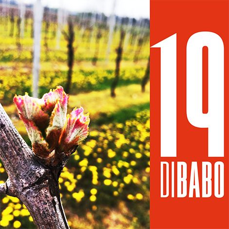 #welcome #spring #19dibabo #italy #wine #forpartylovers