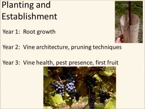 NDSU Spring Fever Garden Forum - Harlene Hatterman-Valenti (Grape Growing for Gardeners) - http://winecentral.net/ndsu-spring-fever-garden-forum-harlene-hatterman-valenti-grape-growing-for-gardeners/
