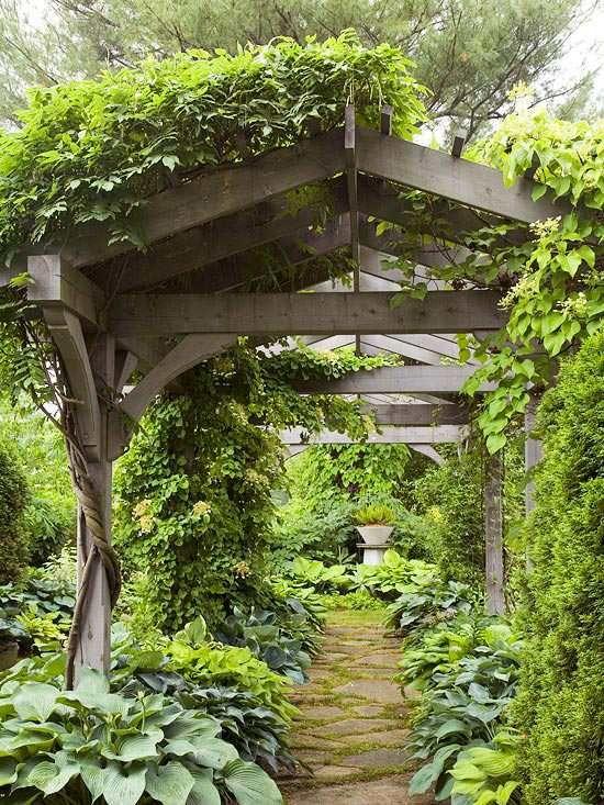 Kletterpflanzen Grüne-Wand Sonnensegel Holzkonstruktion