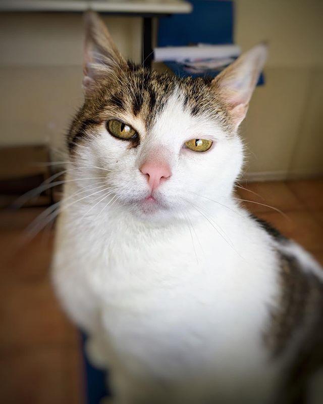 La bigotona  . . . . #cat #catsofinstagram #catstagram #pet #photooftheday #pictureoftheday #love #instagood #instalike #instachile #instaconce #picoftheday #happy