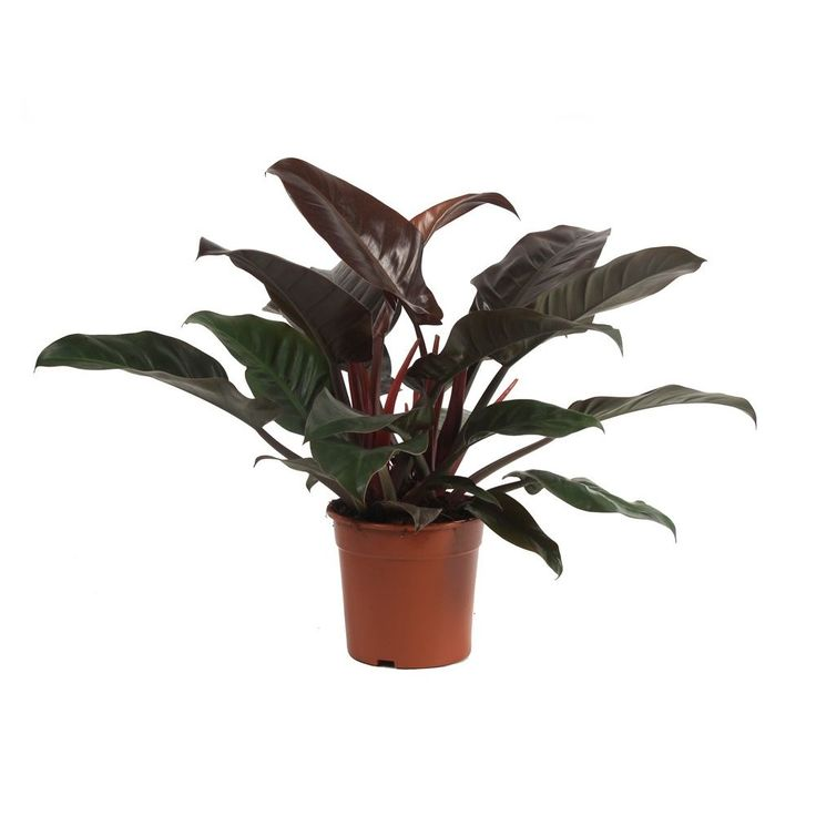 les 220 meilleures images du tableau r ver de verdure sur pinterest feuilles les plantes et. Black Bedroom Furniture Sets. Home Design Ideas