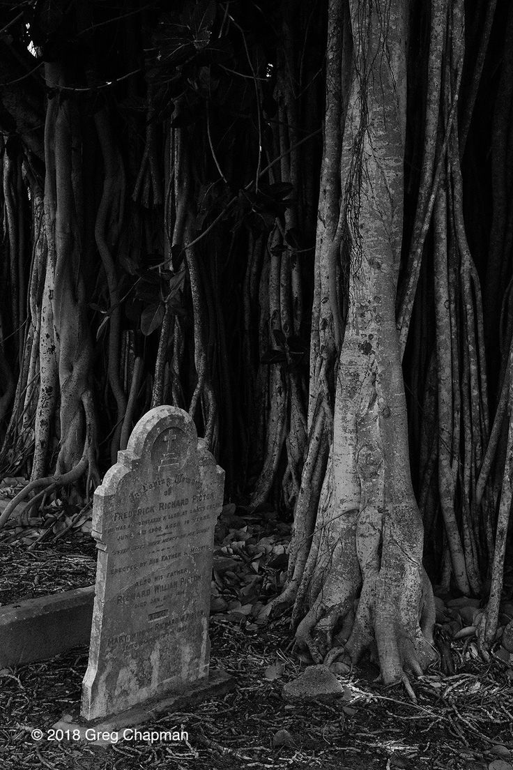 Rockhampton cemetery, 2018.