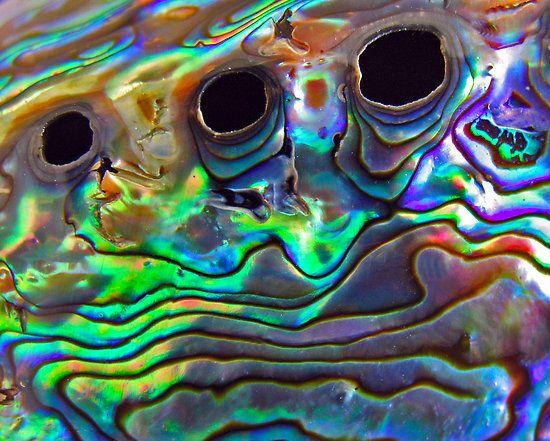 Paua Shell by Robyn Carter