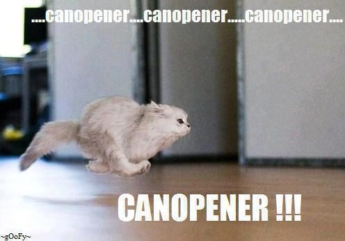 My cat does this. lol