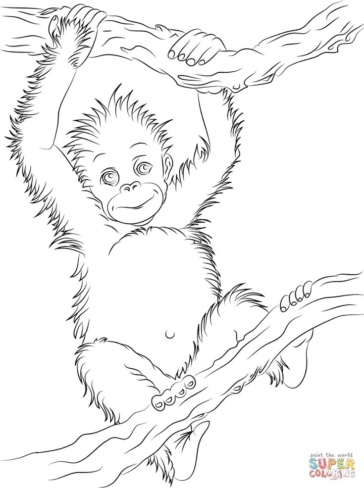 Cute Baby Orangutan Coloring Page From Orangutans Category Select 27007 Printable Crafts Of Cartoons Nature Animals Bible And Many More