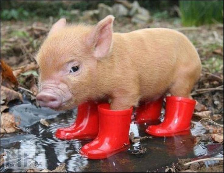 豚: Animals, Rain Boots, So Cute, Pet, Pigs, Piggy, Piglet