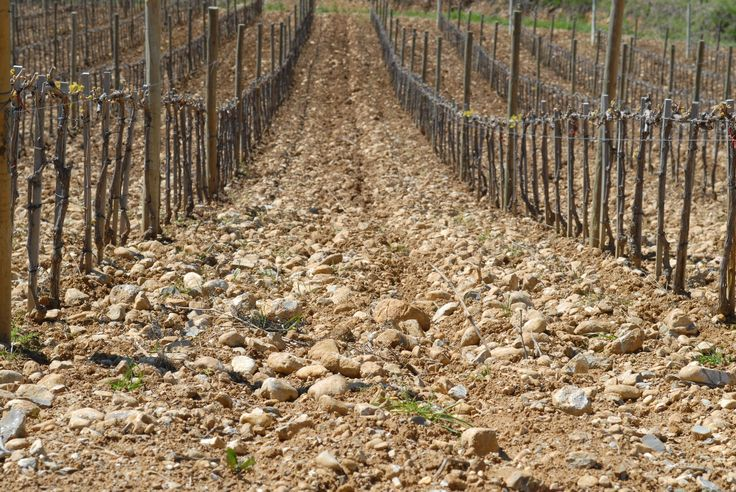 Az. Agr. Roccapesta Nostro terroir / Our Terroir / Наш терруар