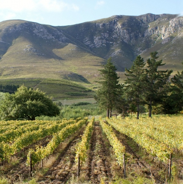 Hermanuspietersfontein #wine #winelands #southafrica