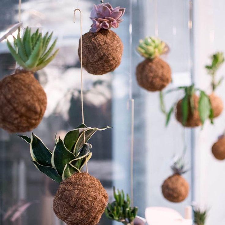 """63 Synes godt om, 4 kommentarer – Wohlfühlzone Sabine Wiercimok (@wohlfuehlzone) på Instagram: """"Sonnige Grüße aus unserem neuen Lieblingsfenster  @planteplaneter #pflanzen #pflanzenliebe…"""""""