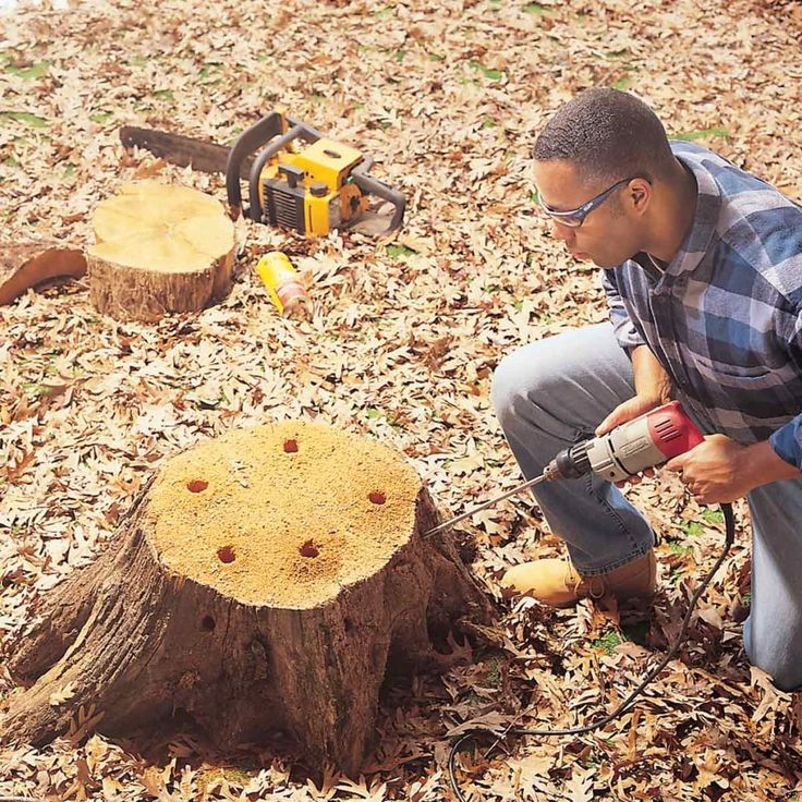 How to Remove a Tree Stump Painlessly in 2020 Tree stump