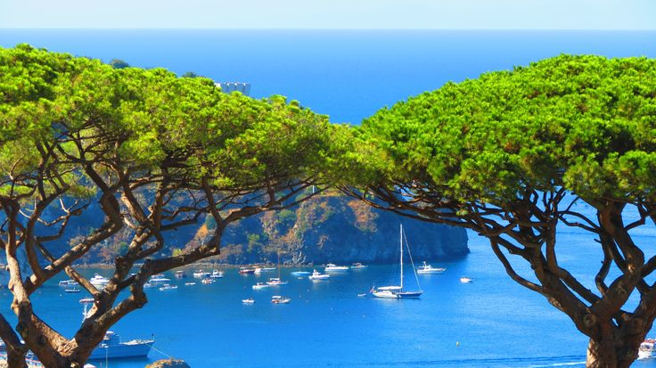 Pine Trees in Casamicciola - Part of the Ischia Review Gallery - www.ischiareview.com