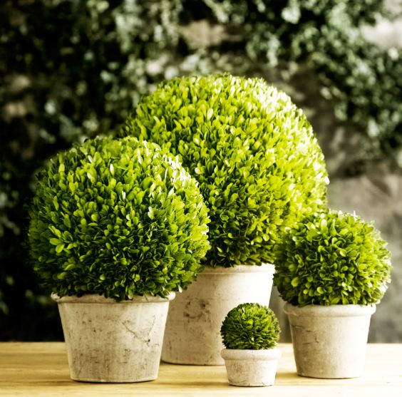 Preserved boxwoods from Restoration Hardware. Ideal for spaces in your home that don't get a lot of light. I'm thinking my bathroom and foyer could benefit from these!