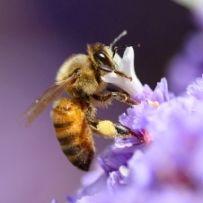 The Key to Innovative Business Ideas: Cross-Pollination